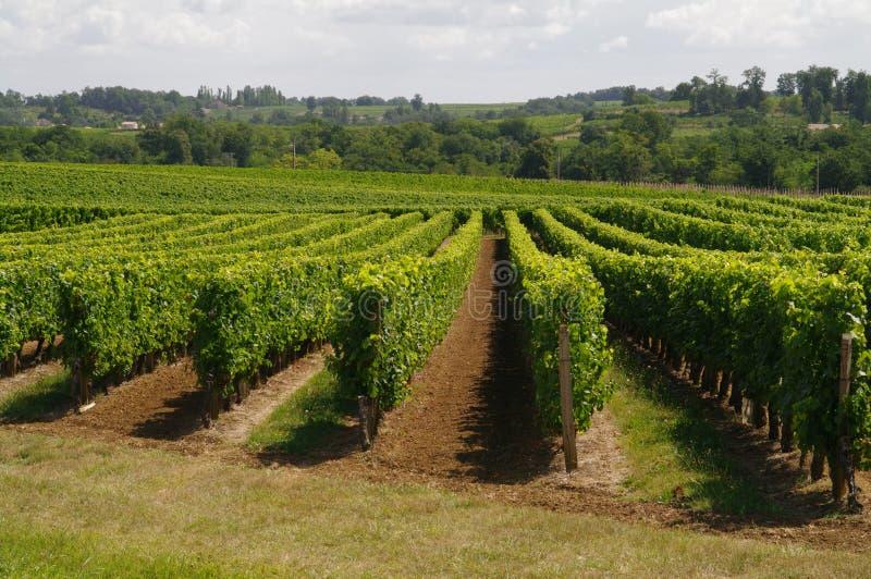 De wijngaarden van Frankrijk stock foto