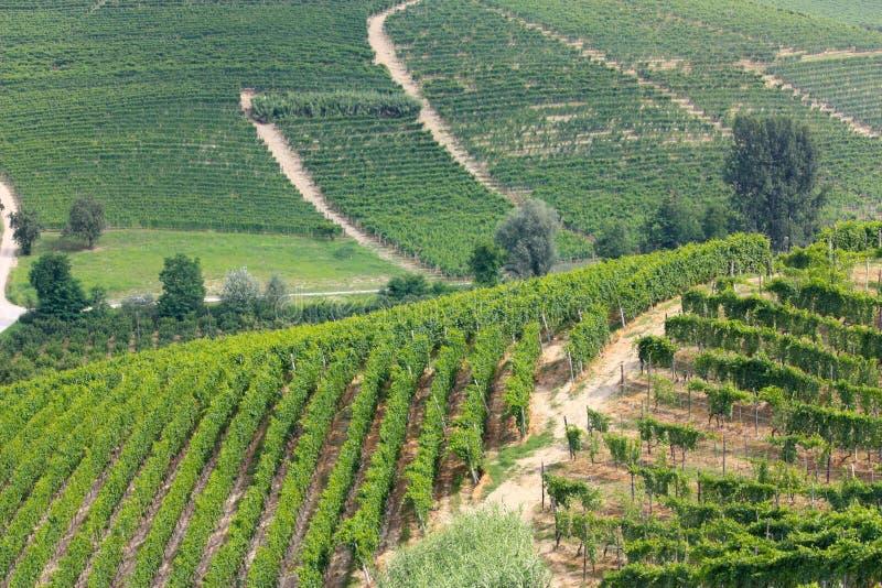 De wijngaarden van Langhe in Italië stock fotografie