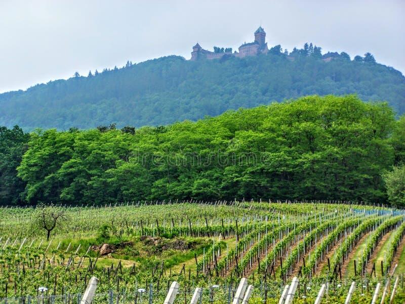 De Wijngaardlandschap van wijngaardenhaut koenigsbourg langs de routedes vins dorpen, de Herfst, de Elzas Bovenrijn, Frankrijk de stock afbeelding