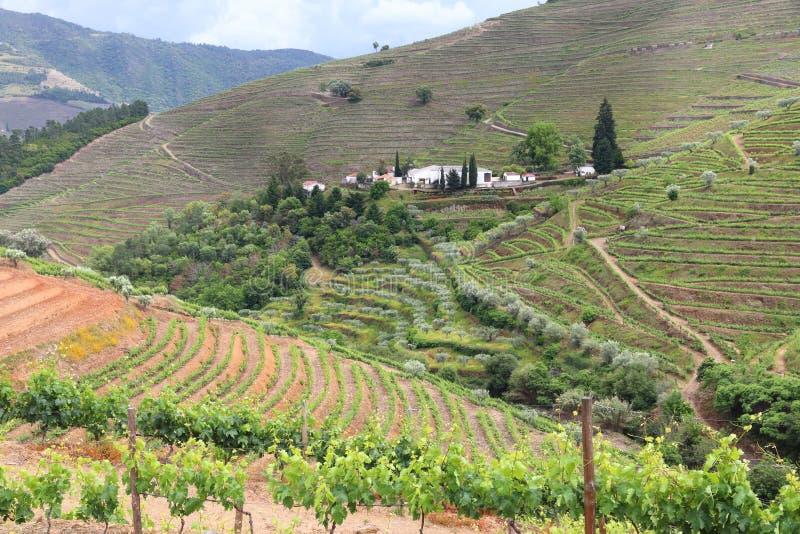 De wijngebied van Portugal royalty-vrije stock foto