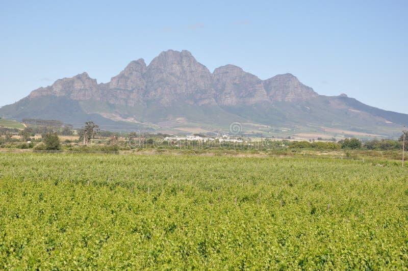 De wijnland van Zuid-Afrika van Stellenbosch royalty-vrije stock foto's