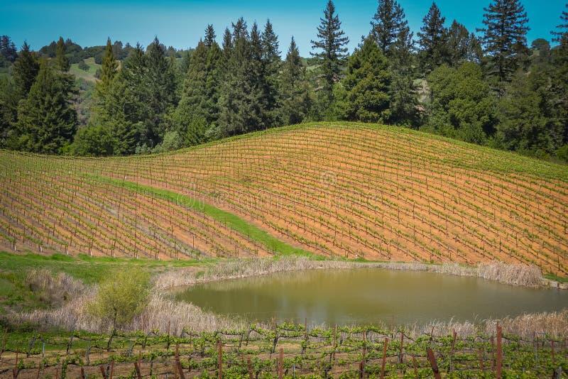 De Wijnmakerij van de Navarrofamilie dichtbij Philo CA royalty-vrije stock foto