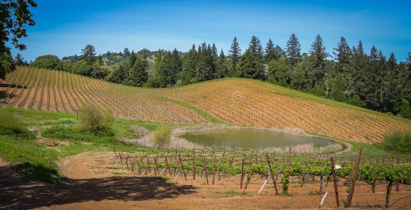 De Wijnmakerij van de Navarrofamilie dichtbij Philo CA royalty-vrije stock fotografie