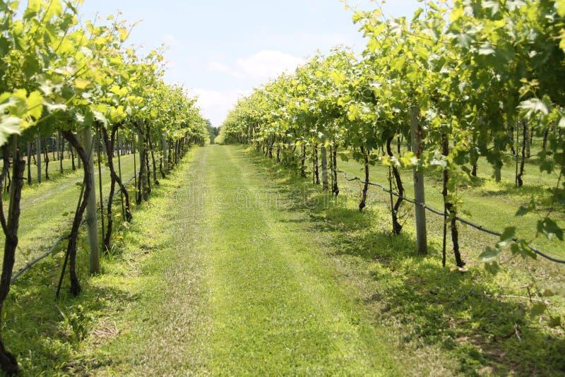De Wijnmakerij 2019 van Illinois stock afbeelding