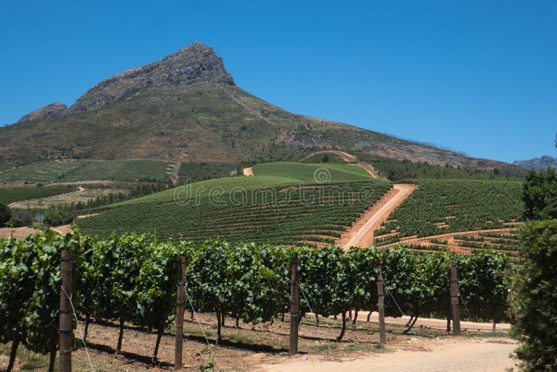 De wijnmakerij Zuid-Afrika van Delairegraff royalty-vrije stock afbeeldingen