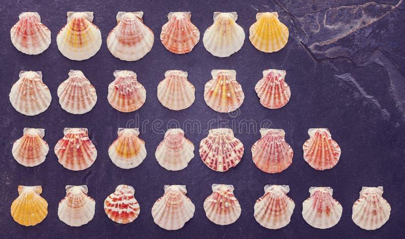 De wijnoogst stileerde kleurrijke shells op donkere steenachtergrond stock afbeelding