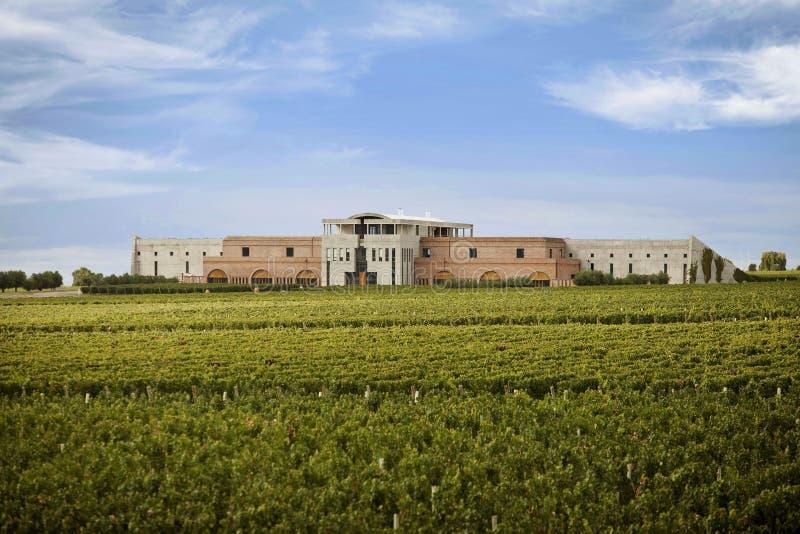 De wijnprofielen royalty-vrije stock foto's