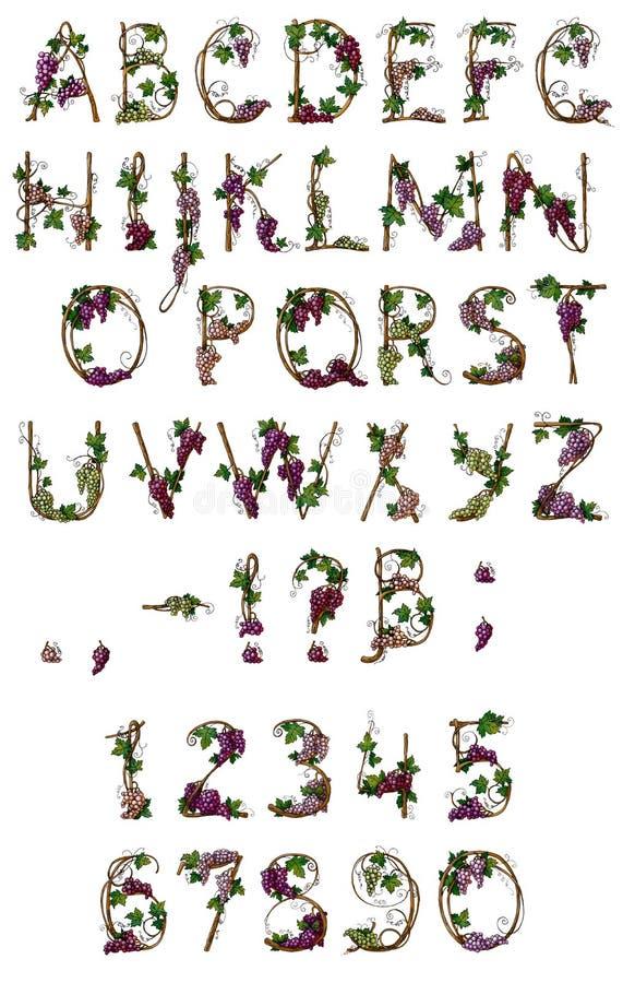 De wijnstok van het alfabet royalty-vrije illustratie