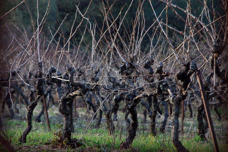 De Wijnstokken van de winter stock foto