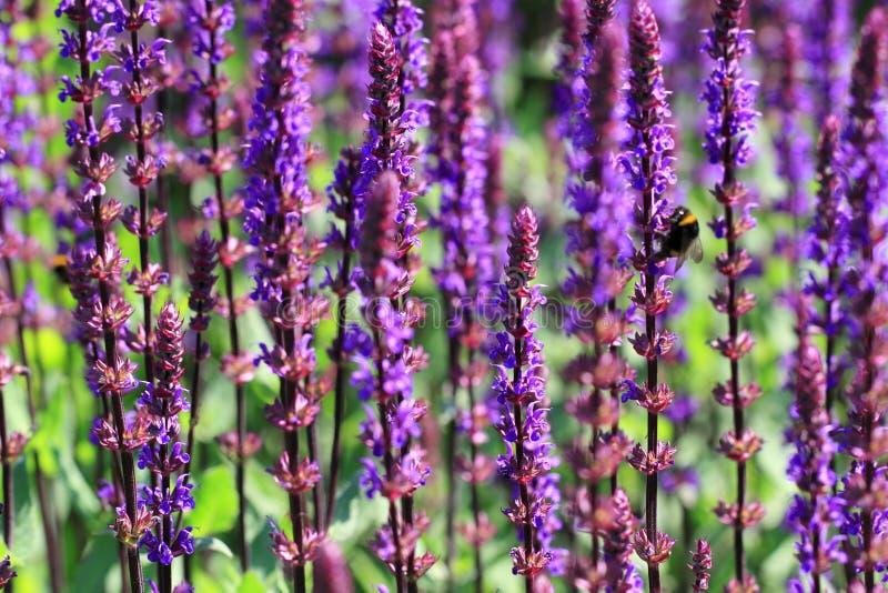 De wijze installatie trekt voordelige insecten in de tuin aan stock fotografie