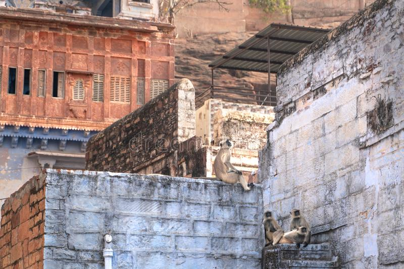 De wilde apen op het dak royalty-vrije stock afbeeldingen