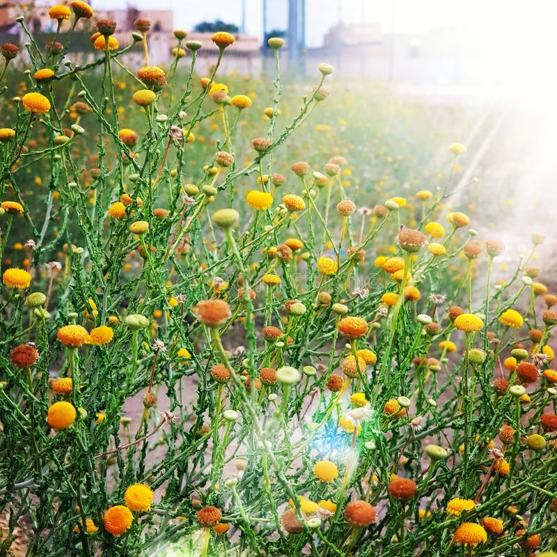 De wilde bloemen stock afbeeldingen