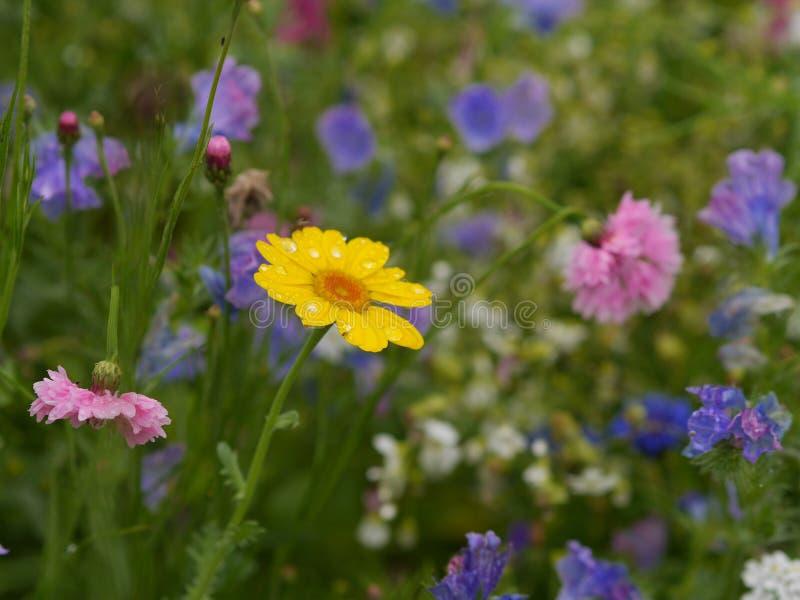 De wilde Bloemen van de Lente royalty-vrije stock foto