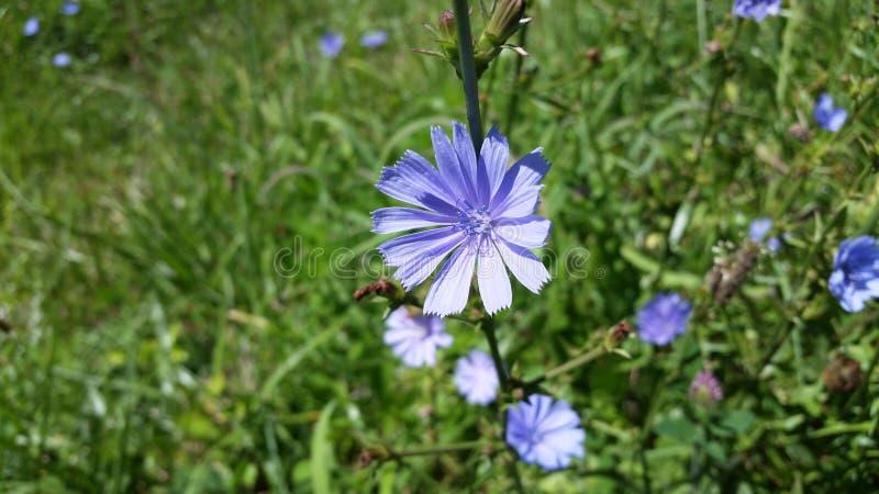 De wilde bloemen van de zomer royalty-vrije stock afbeelding
