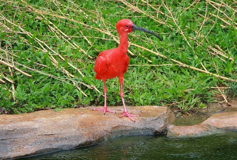de wilde dierentuin in guangzhou, Guangdong, China stock foto