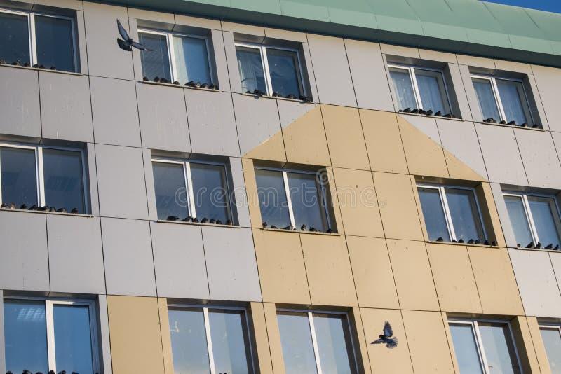 De wilde duiven die op de richel van een wolkenkrabber zitten stock fotografie