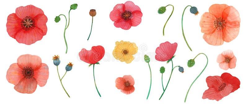 De wilde naadloze illustratie van het de waterverfpatroon van de bloemenpapaver stock illustratie