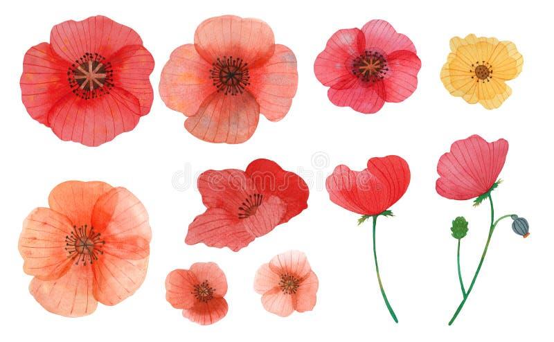 De wilde naadloze illustratie van het de waterverfpatroon van de bloemenpapaver vector illustratie