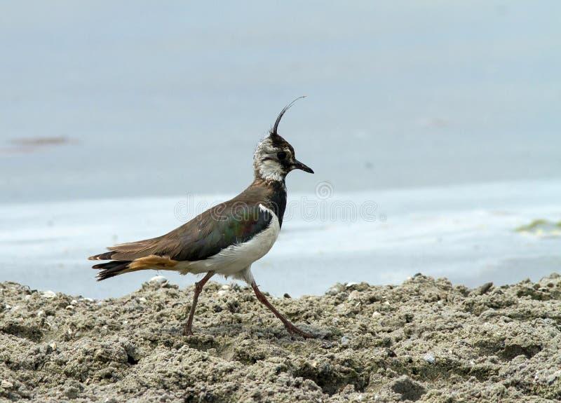 De wilde vogel op riverbank royalty-vrije stock foto