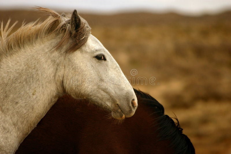 De wilde Woestijn van het Veulen stock fotografie