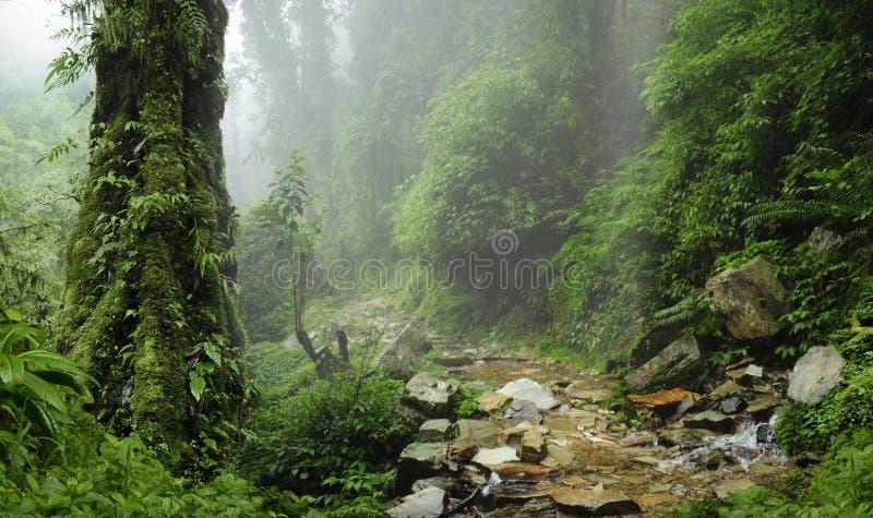 De Wildernis van Nepal stock afbeelding