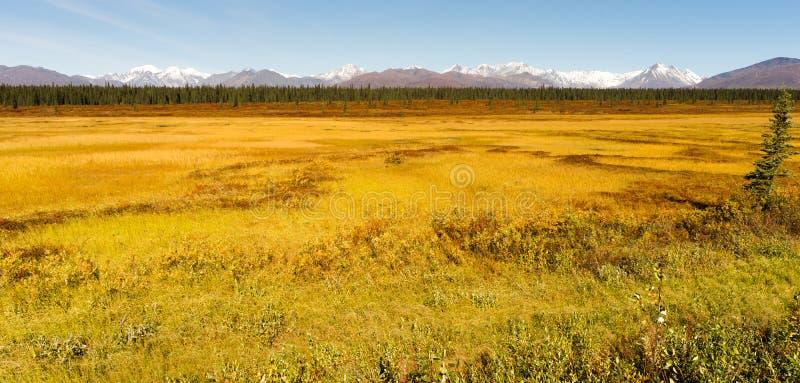 De Wildernisgebied van Alaska van de Denaliwaaier Centraal royalty-vrije stock fotografie