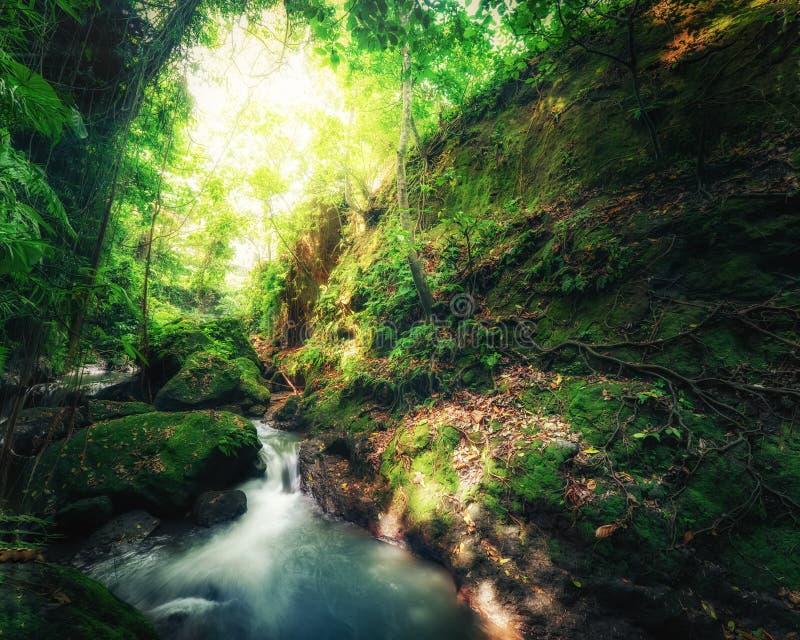 De wildernissengeheimzinnigheid van Indonesië wild landschap stock afbeeldingen