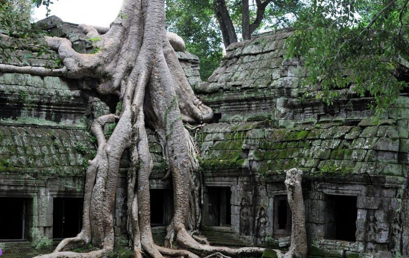 De wildernistempel Ta prohm in angkor stock afbeelding