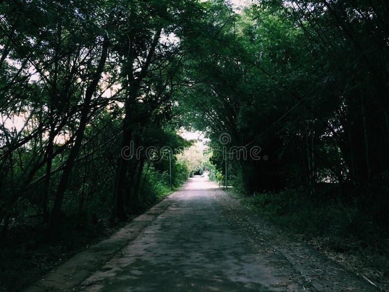 De wildernisweg, gaat enkel door stock afbeeldingen