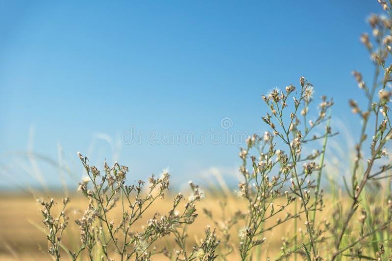 De wind die de bloemen slingeren royalty-vrije stock afbeelding