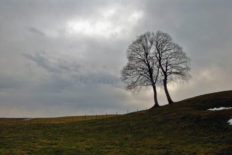 De wind van de winter royalty-vrije stock afbeelding
