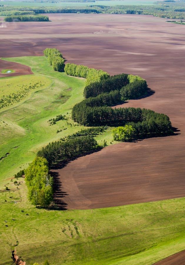 De windende die rand van het gebied, van de weide door een pluizige het planten boom wordt gescheiden stock afbeeldingen