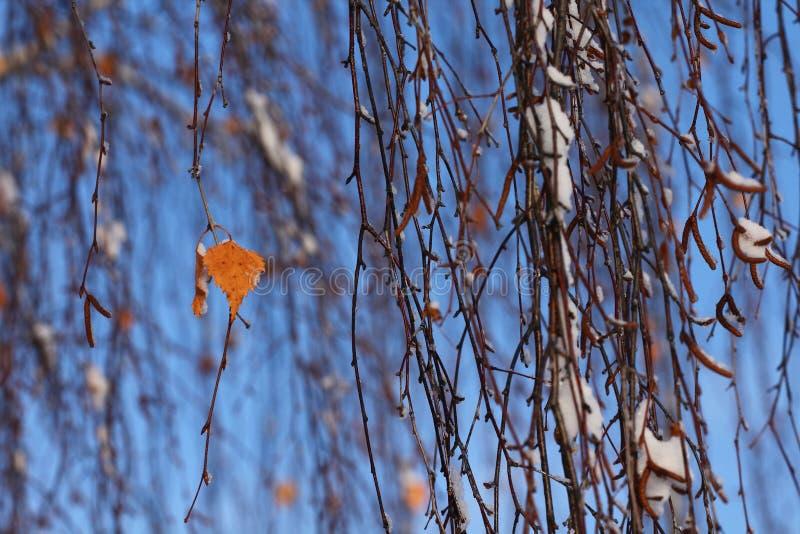 Download De winter stock foto. Afbeelding bestaande uit glowing - 107701748