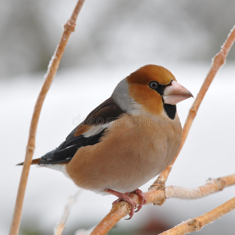 In de winter stock afbeeldingen