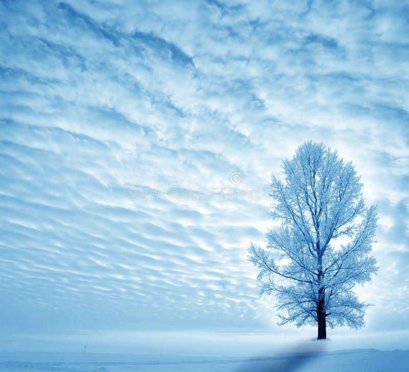De winter stock fotografie