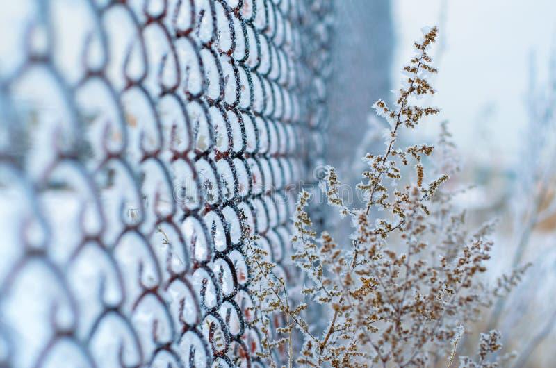 De winter. stock afbeelding
