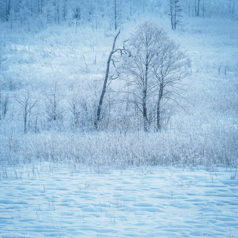 De winter in aarddomein Schwemm in Walchsee Tirol stock afbeelding