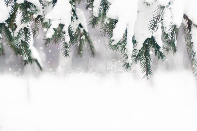 De winter background Sparrentak met sneeuw in de winterdag die wordt behandeld royalty-vrije stock afbeeldingen