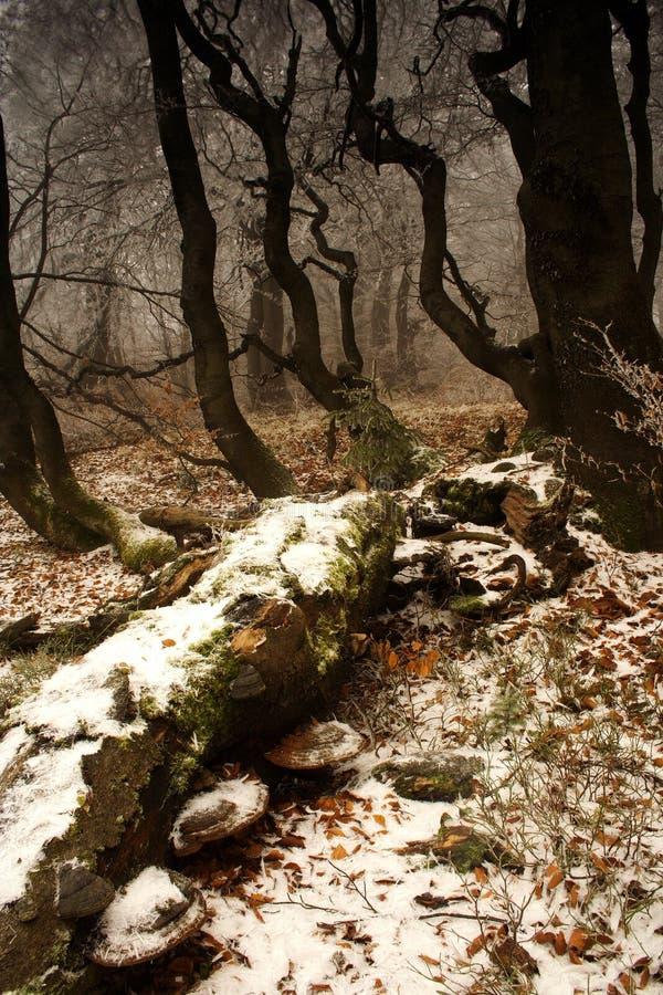 De winter begint in bos royalty-vrije stock foto