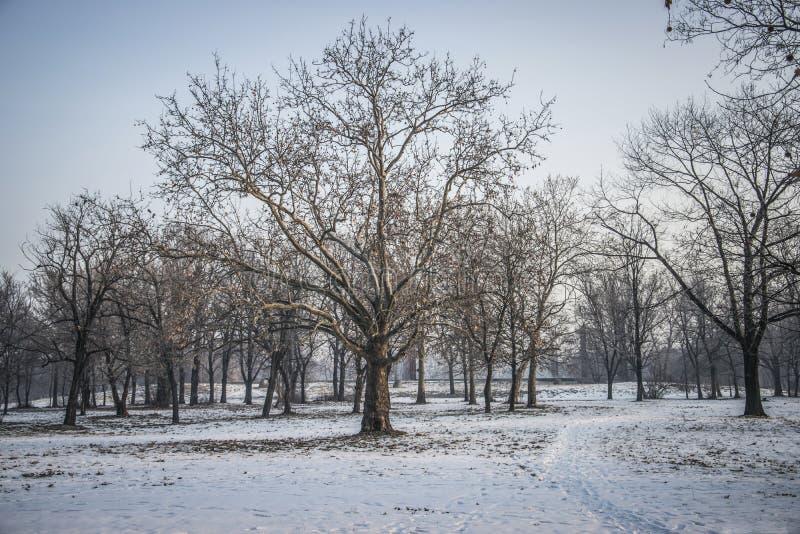 Download De winter in Belgrado stock foto. Afbeelding bestaande uit bevroren - 107701250