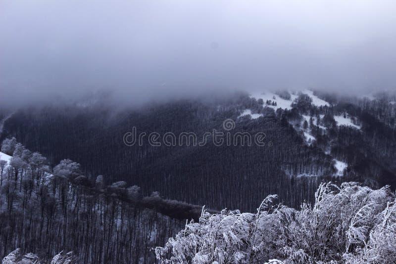 De winter in de bergen de Karpaten, sneeuwbomen met vorst stock afbeeldingen