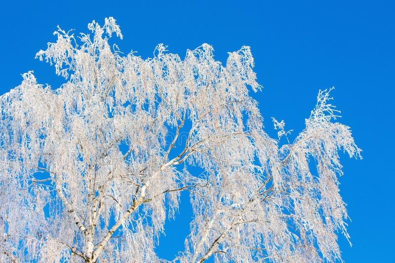 De winter, berktakken met rijp, tegen het blauw worden behandeld dat royalty-vrije stock afbeeldingen