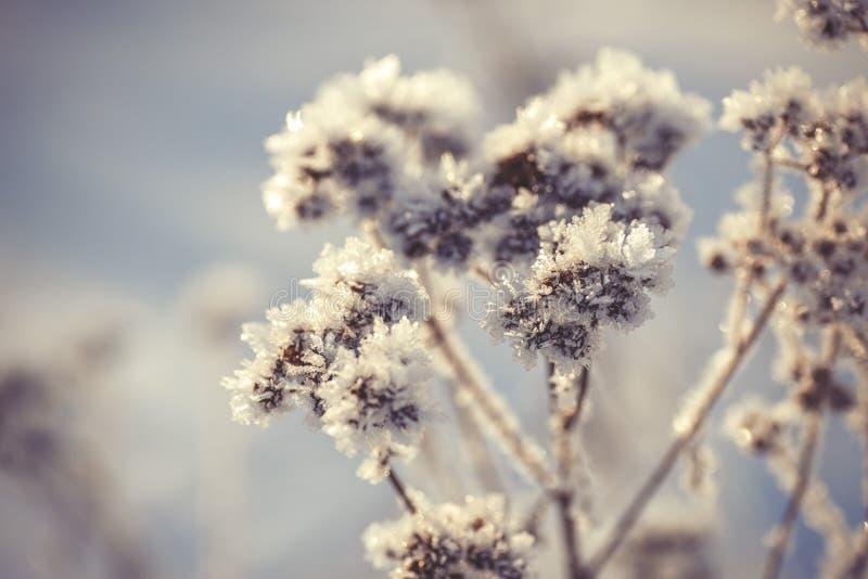 De winter bevroren achtergrond in aard, het bevriezen kristallen op gras, macrofotografie stock foto