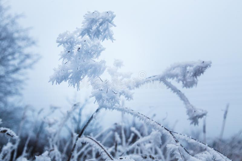 De winter Bevroren effect die tot vormingen van ijs leiden die als Bloembloei kijken stock fotografie