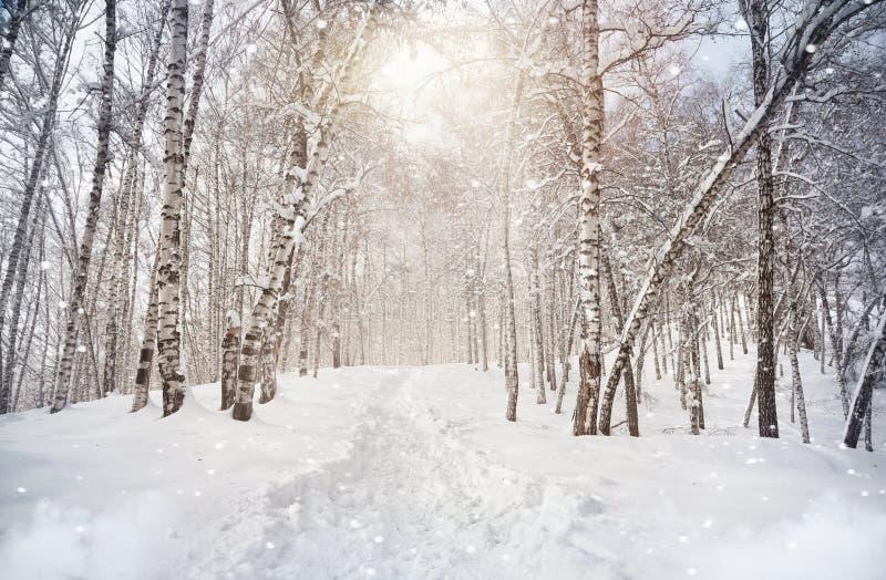 De winter birchwood stock afbeelding