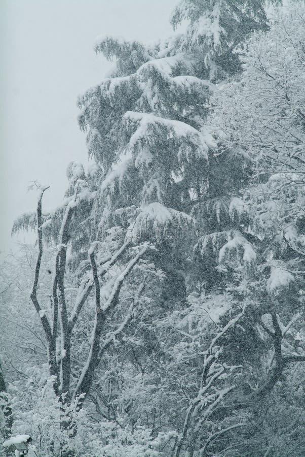 De winter, bomen onder sneeuw stock foto