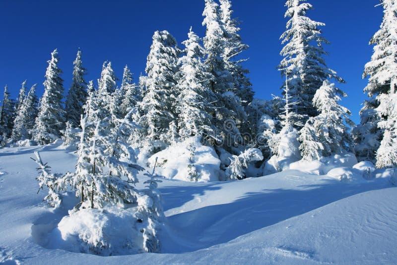 De winter in bos royalty-vrije stock foto's