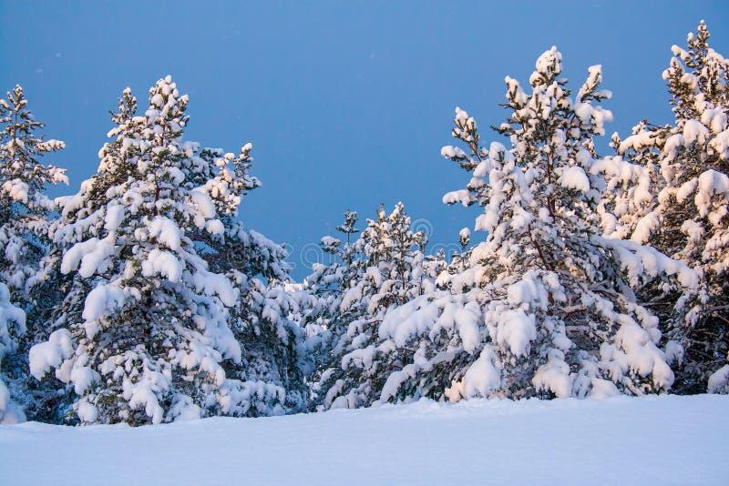 Download De winter in bos stock afbeelding. Afbeelding bestaande uit winter - 107705083