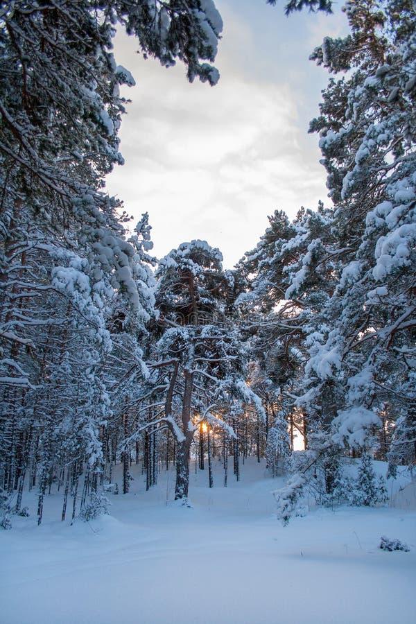 Download De winter in bos stock foto. Afbeelding bestaande uit sneeuwstorm - 107705116