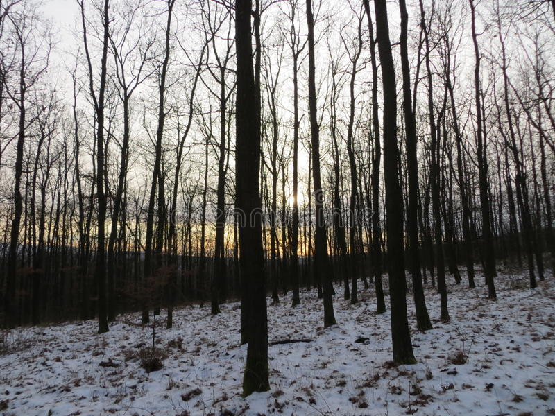 De winter in bos stock fotografie